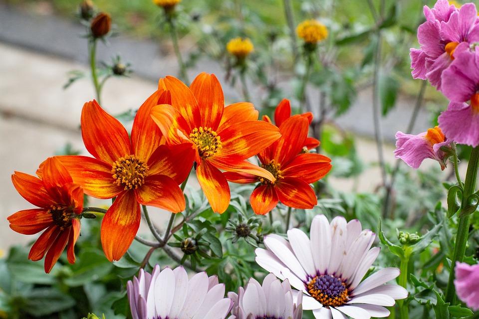 Flowers, Colorful, Orange, Garden, Bloom, Flora