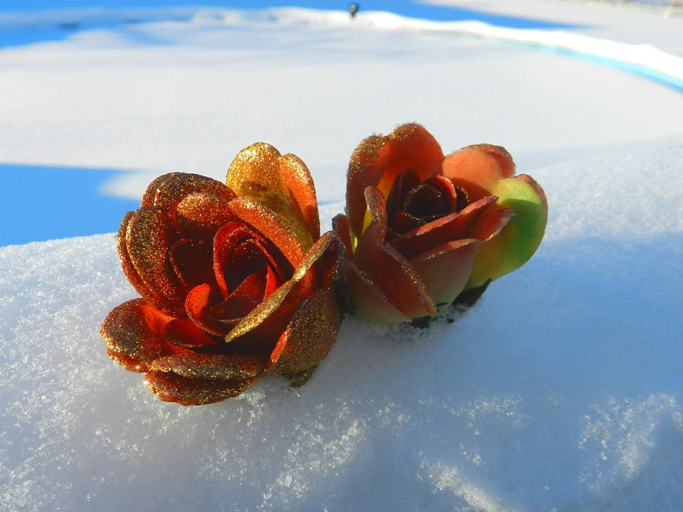 Paper, Background, Scrapbooking, Flowers, Snow