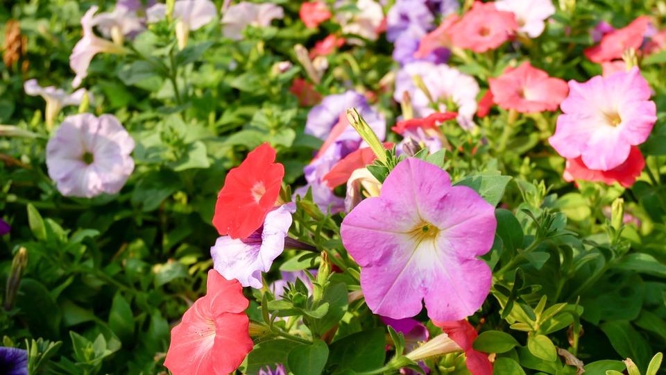 Flowers, Fresh, Nature, Park, Garden