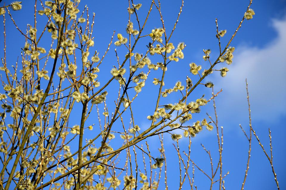 Blooms, Sky, Spring, Nature, Flowers, Plant, Park