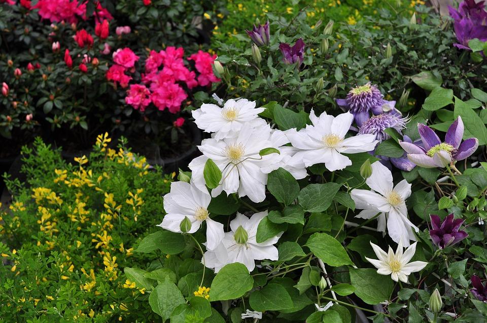 Flowers, Nature, Plants, Garden, Petal