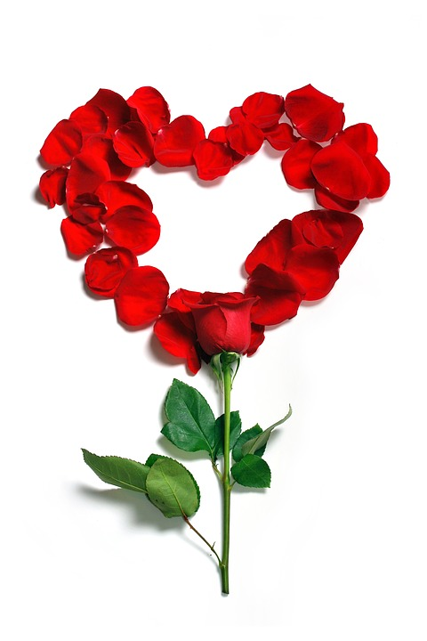 Rose, Petals, Floral, Flowers, Flower, Beautiful, Bloom