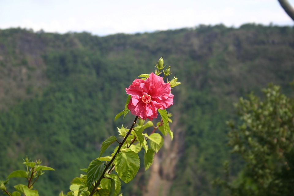 Carnation, Flowers, Flower, Petals, Volcano