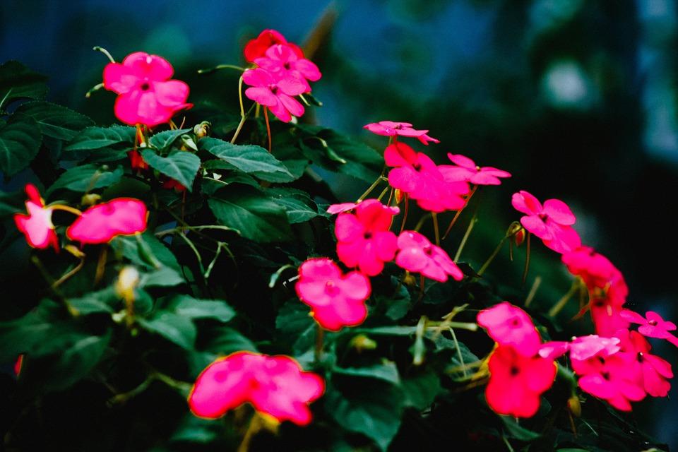 Flowers, Leaves, Petals, Foliage, Garden, Floral