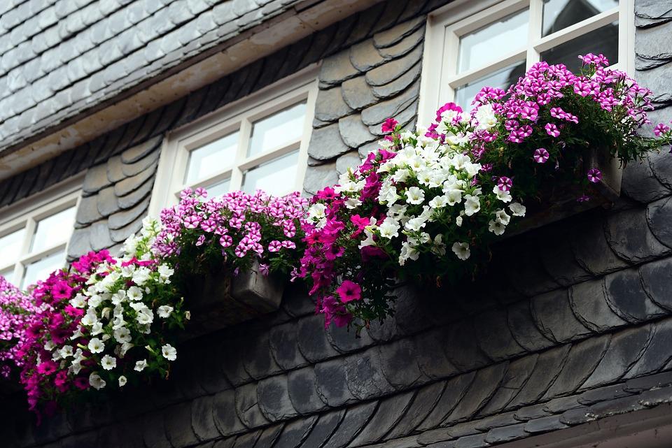 Petunia, Balkonblumen, Garden Petunia, Flowers