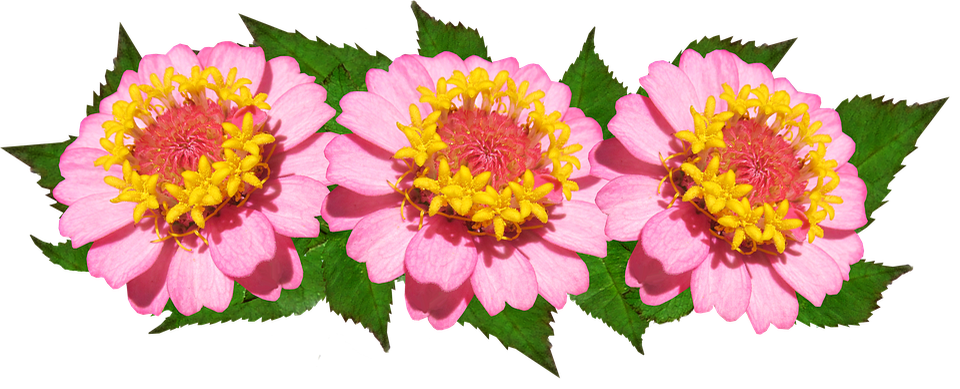 Flowers, Arrangement, Pink, Floral