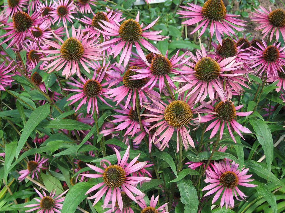 Flowers, Pink, Delicate Flower