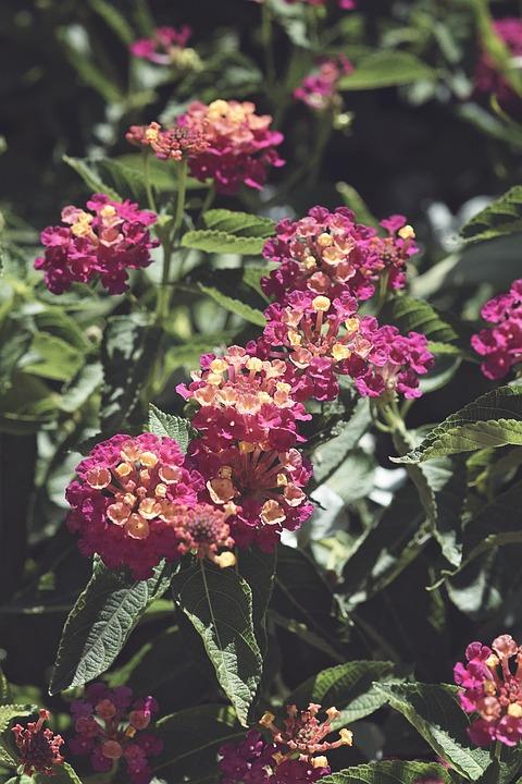 Flowers, Pink, Garden, Pink Flowers, Nature, Spring