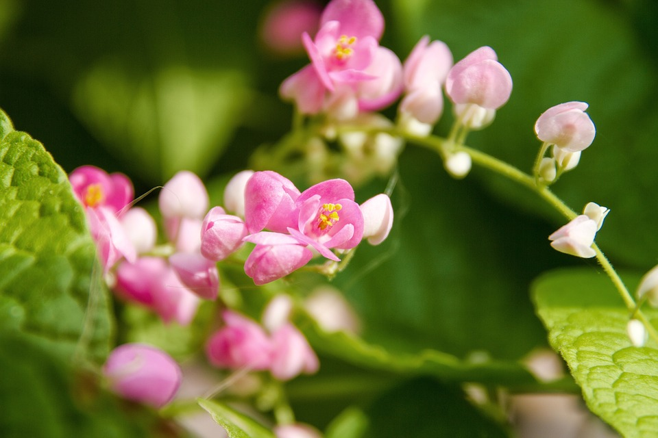 Pwgchmpo, Pink, Flowers, Romance, Green, Flower