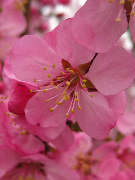 Microfilm Of, Pink, Flowers