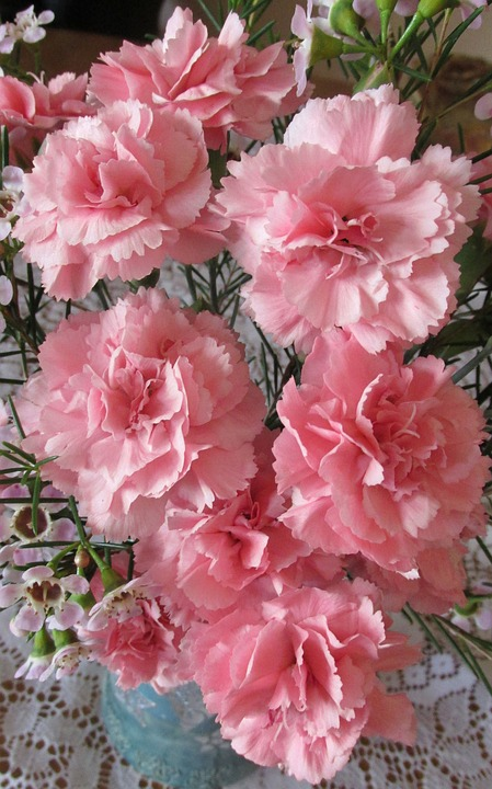 Carnations, Pink, Perfume, Flowers
