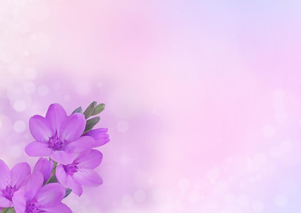Free Photo Flowers Pink Purple Background Image Flower