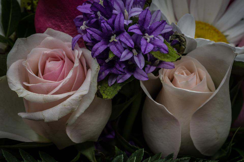 Roses, Flowers, Bouquet, Romantic, Love, Pink, Nature