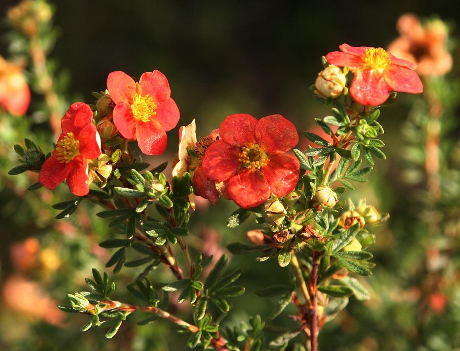 Flowers, Petals, Nature, Flowering, Pistil