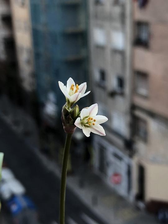 Flowers, Petals, Plant, Botany, Flora