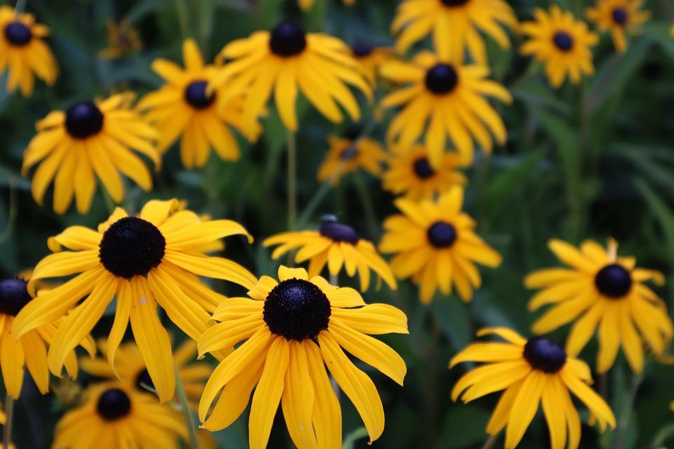 Yellow, Plant, Flowers, Nature, Summer, Garden, Bloom
