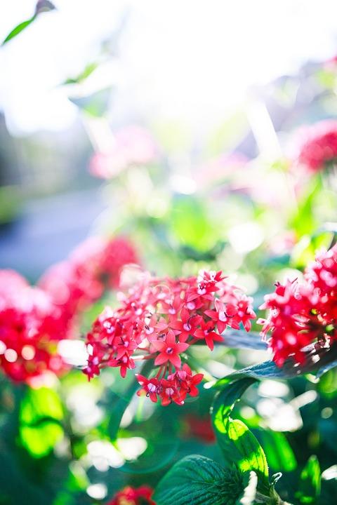 Nature, Green, Leaf, Blossom, Flowers, Plant, Summer