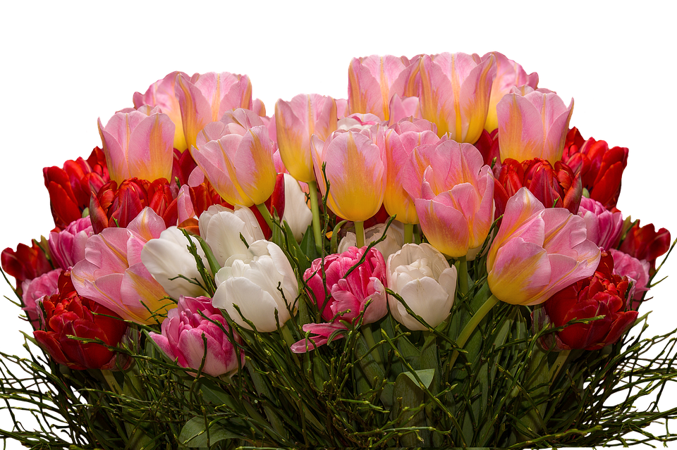 Tulips, Png, Nature, Flowers, Tulpenzwiebel, Spring Bed