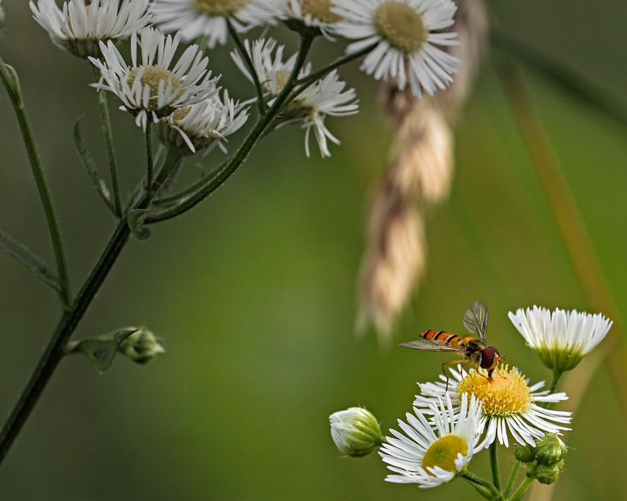 Bee, Flowers, Insect, Nature, Garden, Pollen, Plant