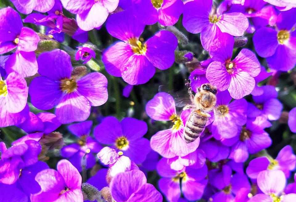 Flowers, Bee, Purple, Pollinate, Pollination, Insect