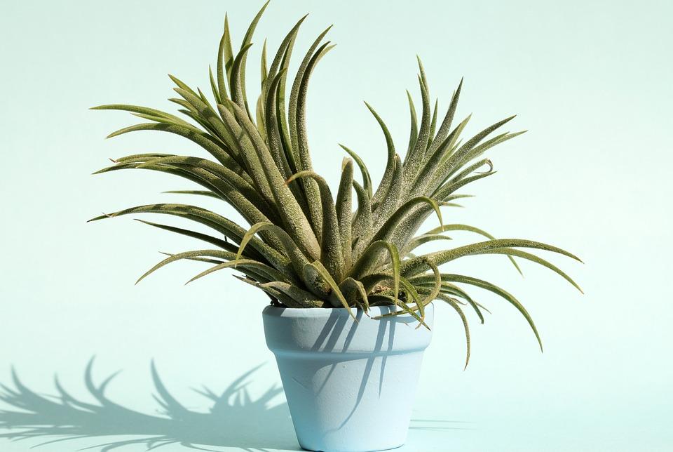Pastel, Potted Plant, Flowers, Season, Plants