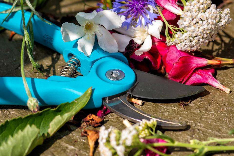 Pruning Shears, Cut, Sharp, Gardening, Flowers