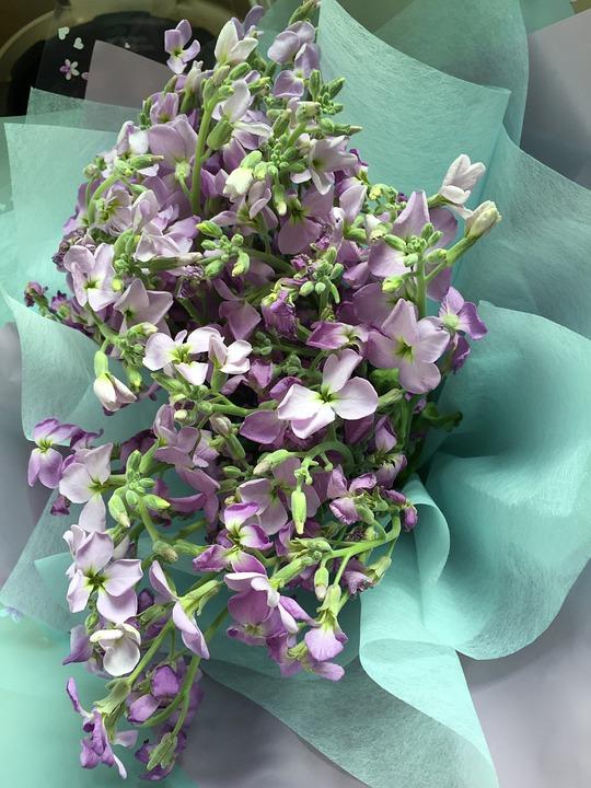 Bouquet, Purple, Flowers, Graduation, Congratulations