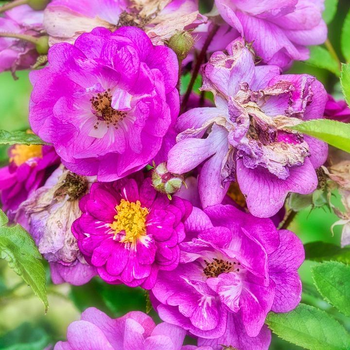 Flowers, Purple, Petals, Purple Flowers, Purple Petals