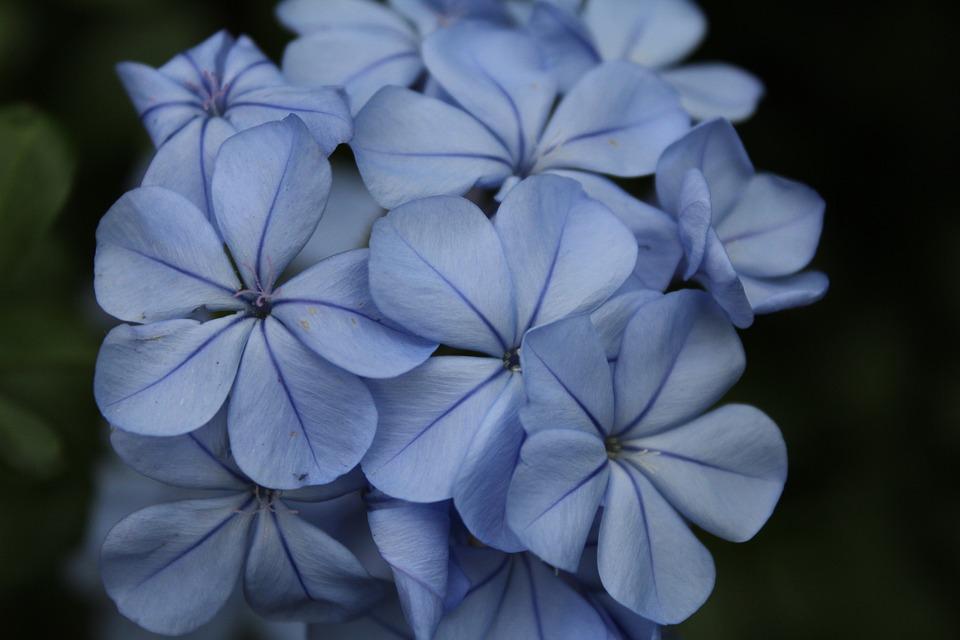 Blue, Purple, Flowers, Bloom, Blooms, Pretty