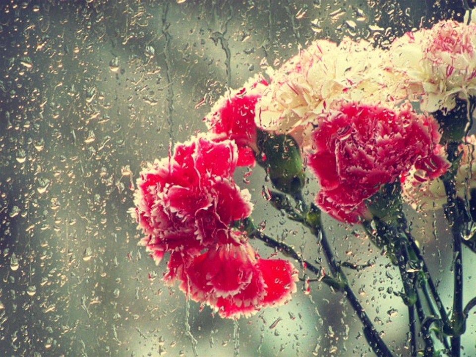 Flowers, Rain, Drops, Nature