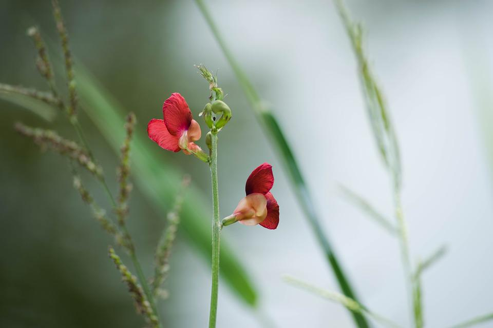 Flowers, Red