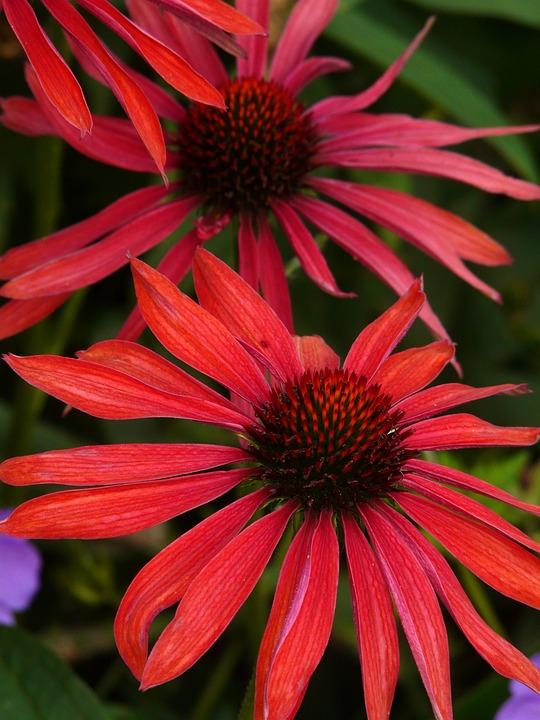 Flowers, Flower, Red, Sun Hat