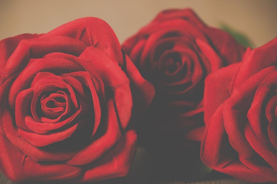Roses, Petal, Love, Romantic, Flowering, Flowers