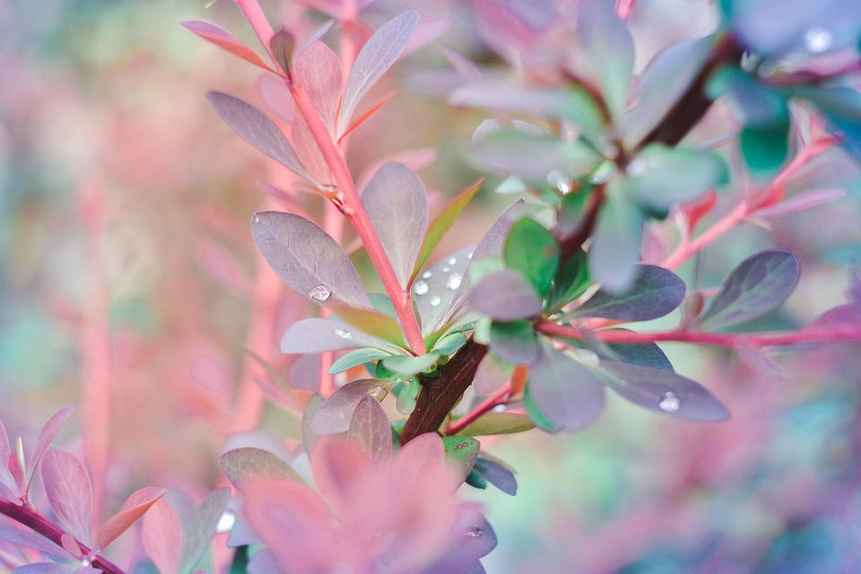 Background, Water, Rosa, Flowers, Rain, Macro, Drop