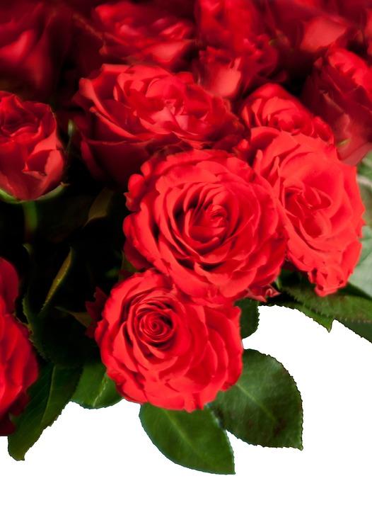 Roses, Bouquet, Flowers, Congratulations
