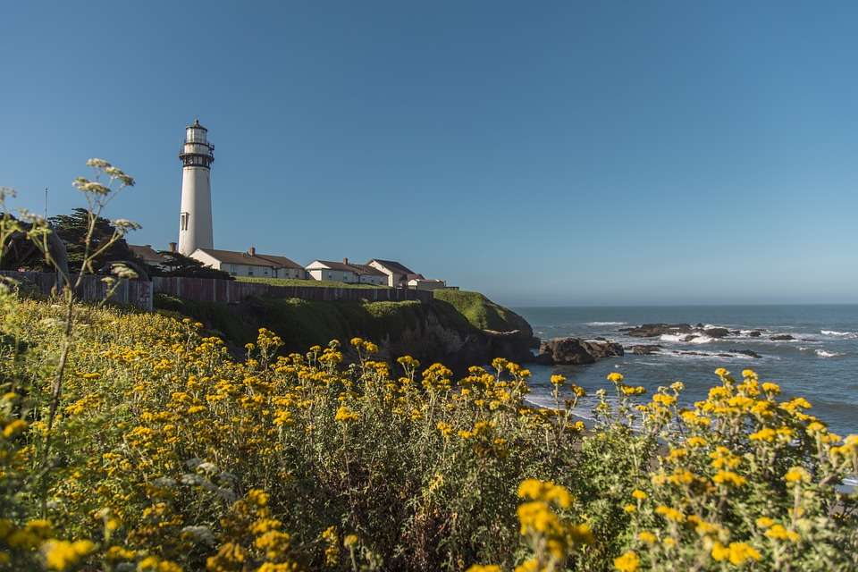 Pacific, Ocean, Nature, Flowers, Lighthouse, Scenery