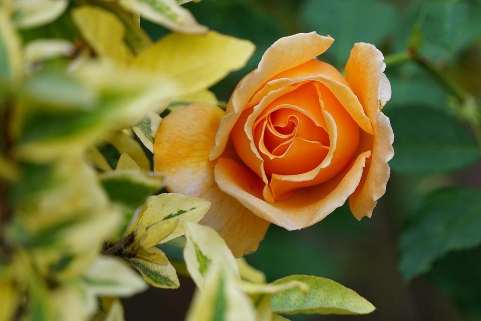 Flowers, Sedona, Bloom