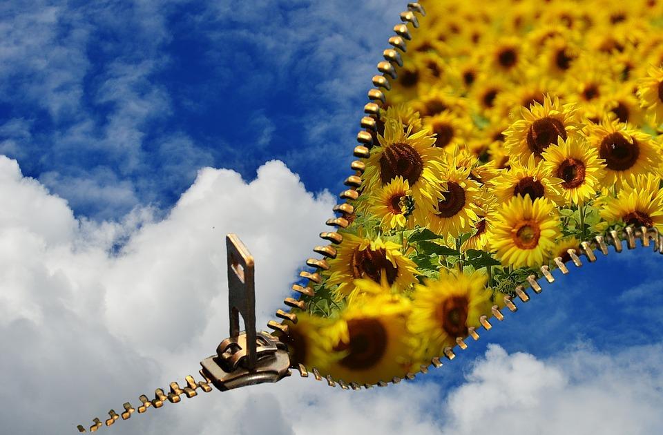 Summer, Sky, Blue, Sunflower, Plant, Flowers, Blue Sky