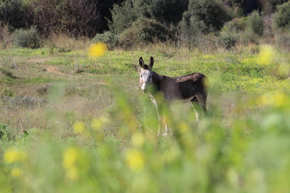 Nature, Field, Animal, Landscape, Flowers, Spain