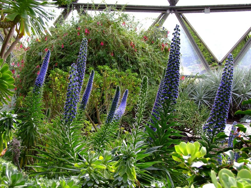 Lupins, Flowers, Botanical Garden, Garden, Spring