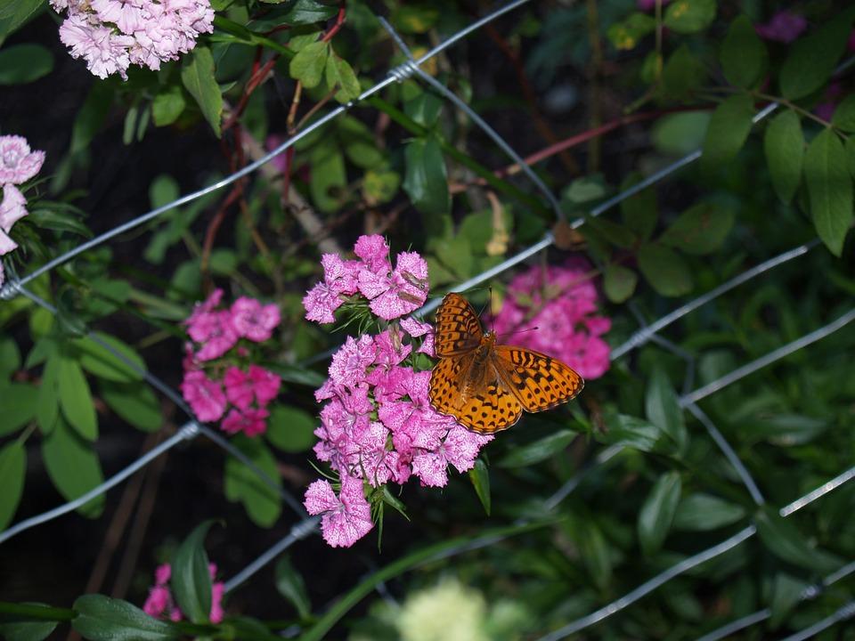 Butterflies, Flowers, Spring