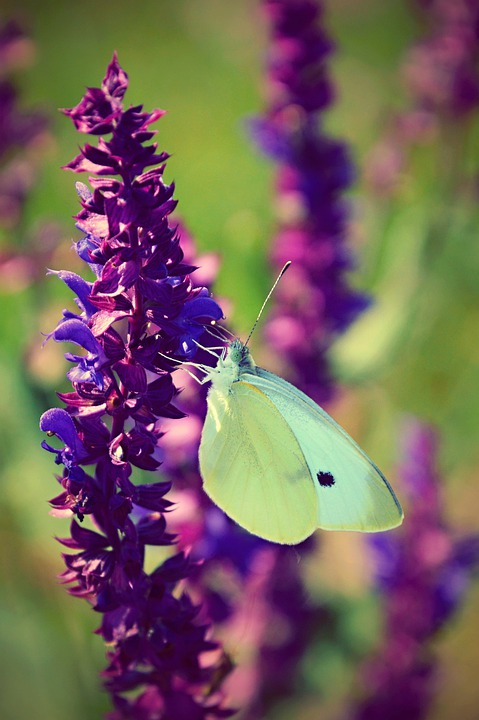 Butterfly, Easter, Spring, Flowers, Nature, Insect