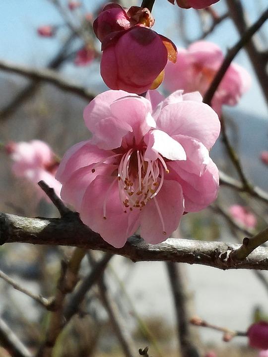 Flowers, Nature, Landscape, Spring Flowers