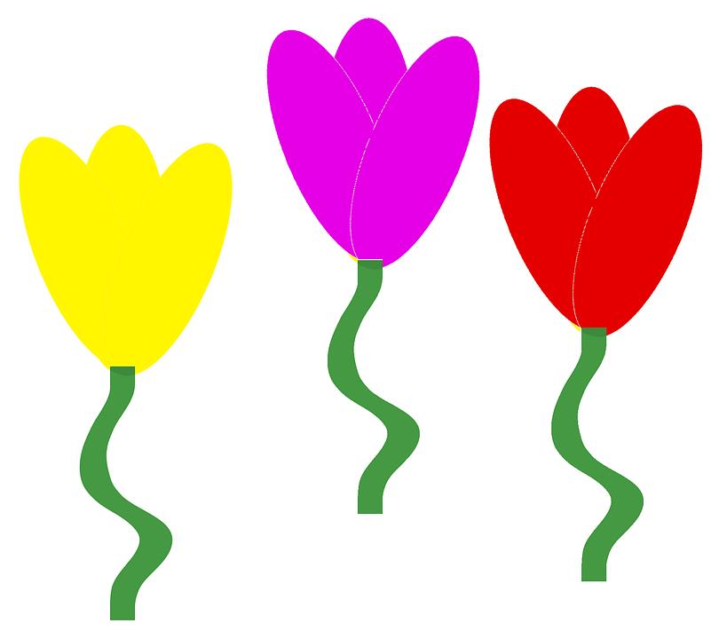 Tulips, Flowers, Spring Flowers, Flowers Background