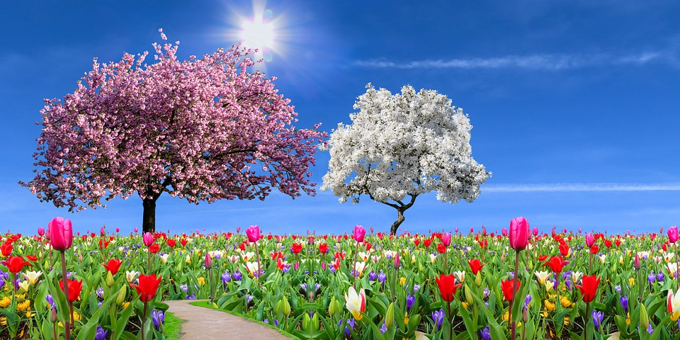 Nature, Landscape, Garden, Spring, Season, Flowers