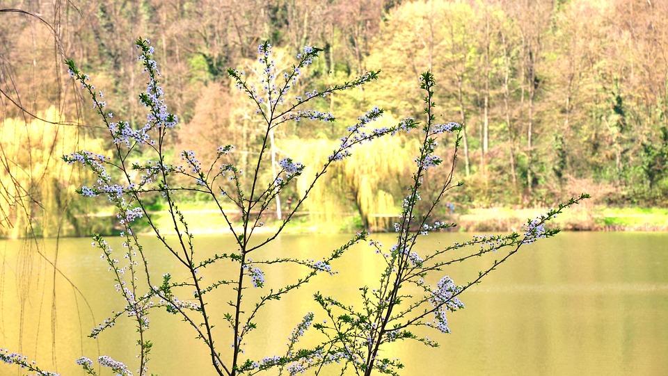 Spring, Lake, Flowers