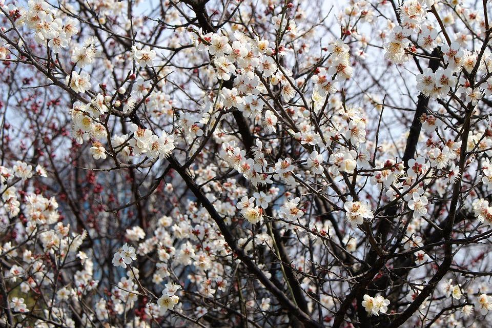 Spring, Landscape, Flowers, Nature