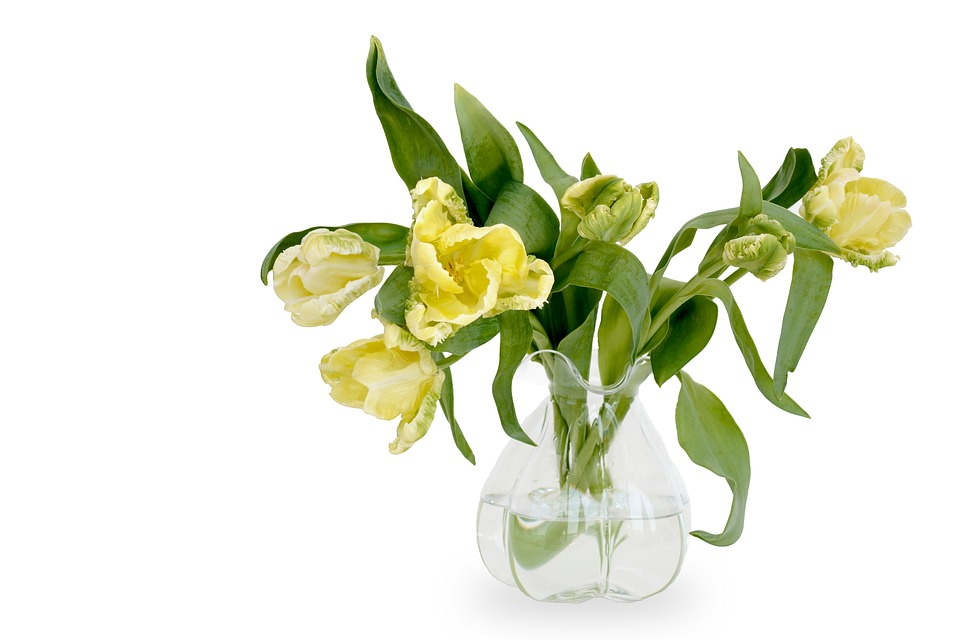 Tulips, Parrot Tulips, Flowers, Yellow, Nature, Spring