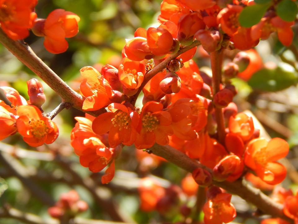 Flowers, Orange, Spring