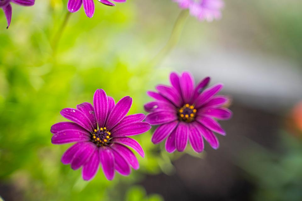Flowers, Purple Flowers, Garden, Spring